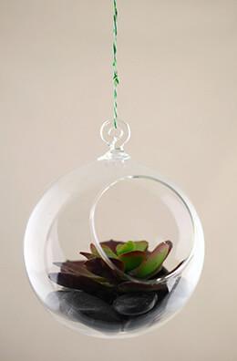 Hanging Glass Terrarium 4in