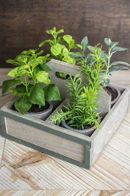 """4 Potted Faux Herbs in Crate 7.5"""" Square"""