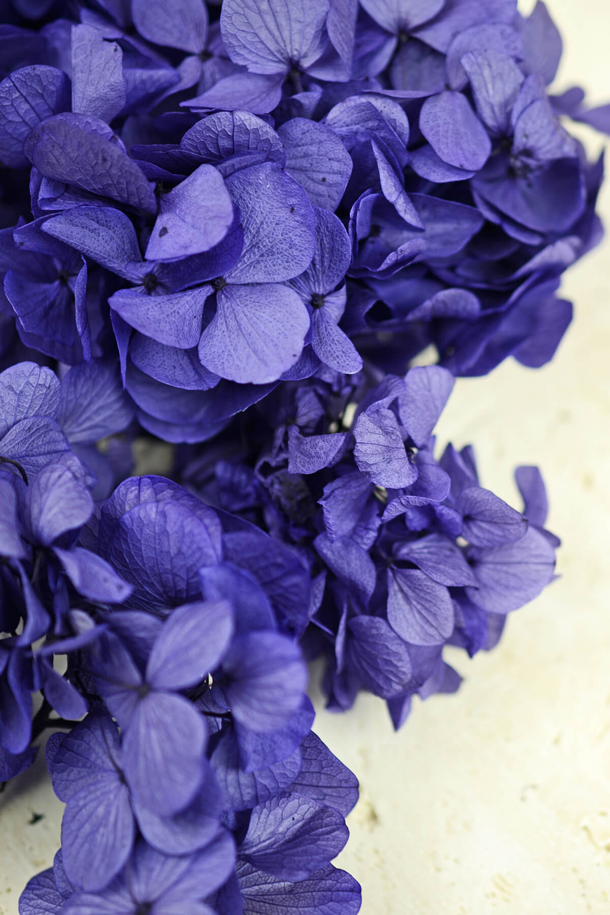 Preserved Purple Hydrangea Flowers 2 Oz Potpourri