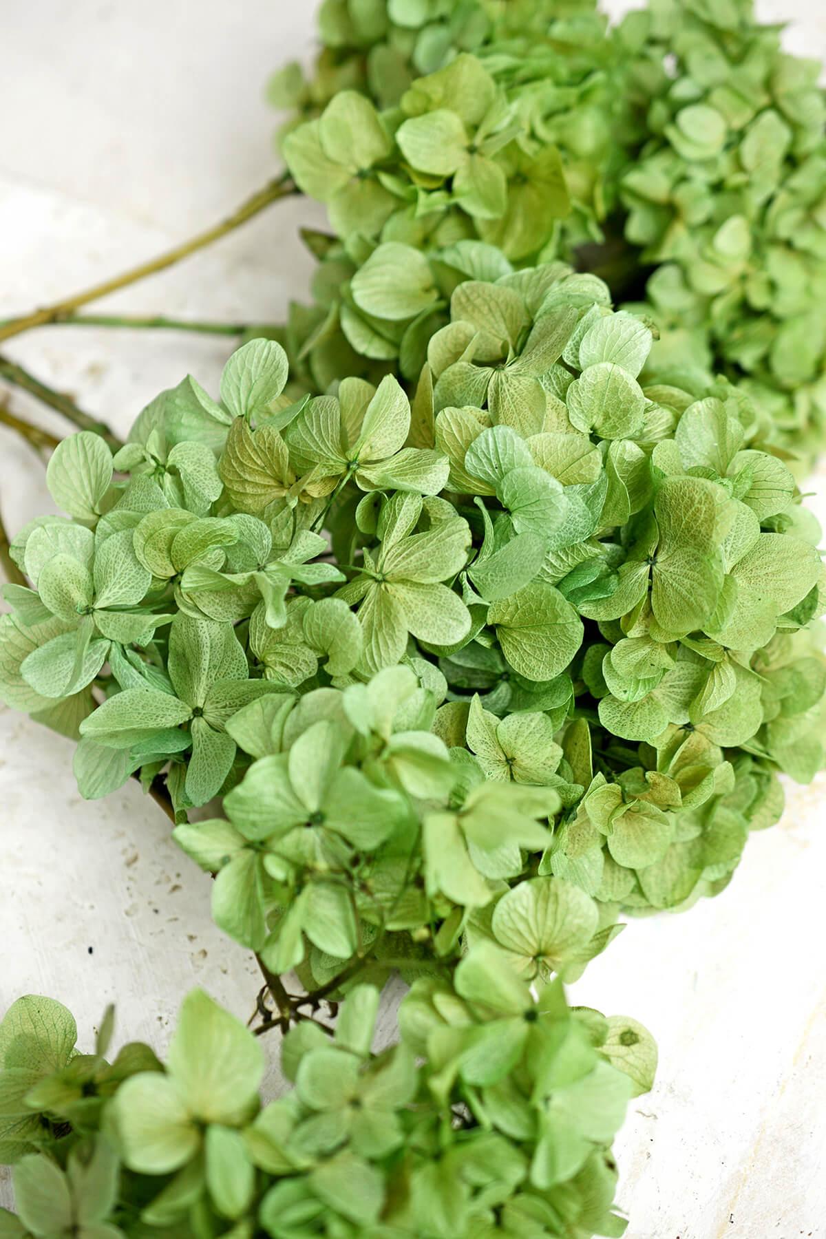 Preserved Green Hydrangea