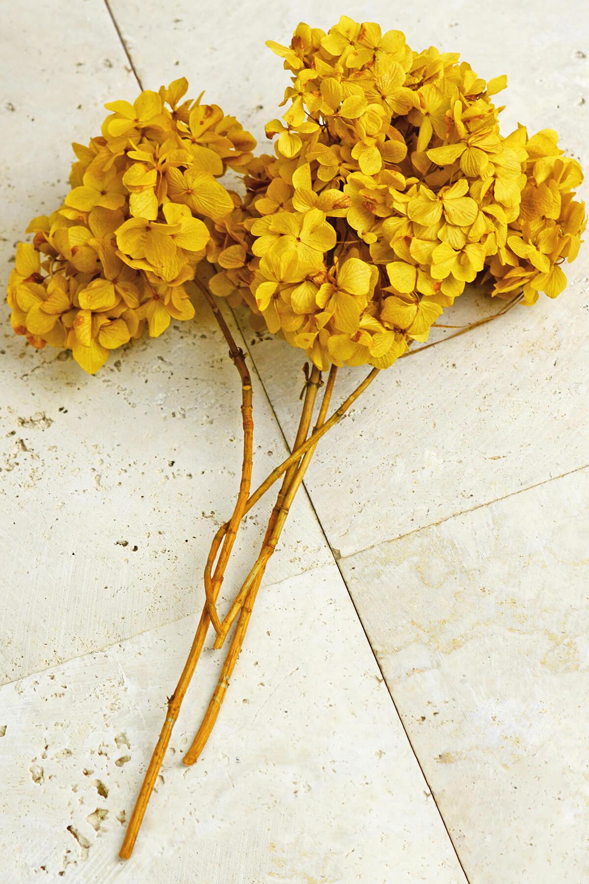 3 Preserved Mango Yellow Hydrangea Flower Stems