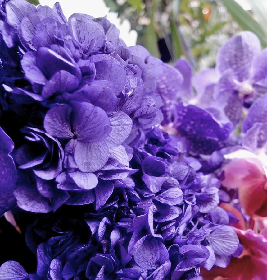 Preserved Purple Hydrangeas Sprays, 3 Flowers