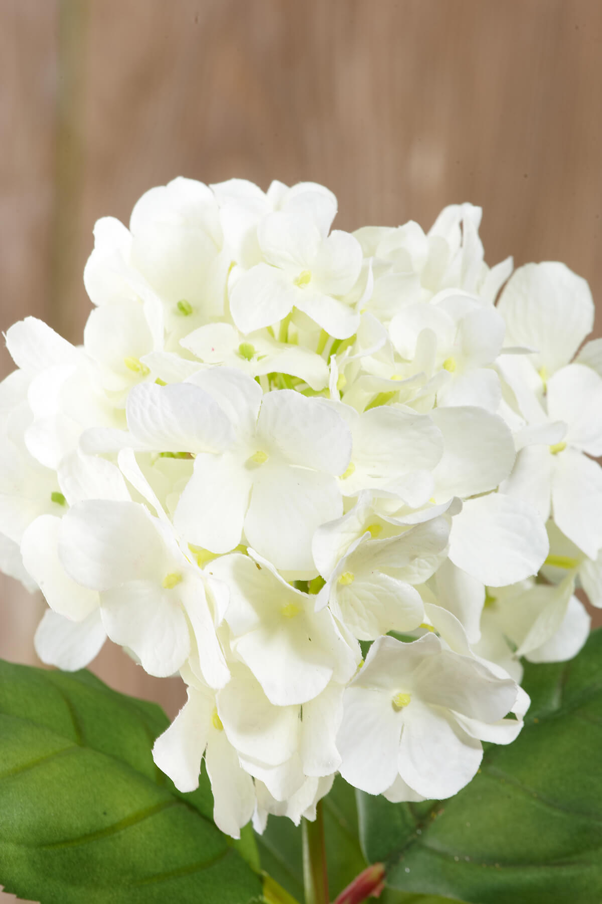Silk Cream White Hydrangea Flowers 5in Bloom