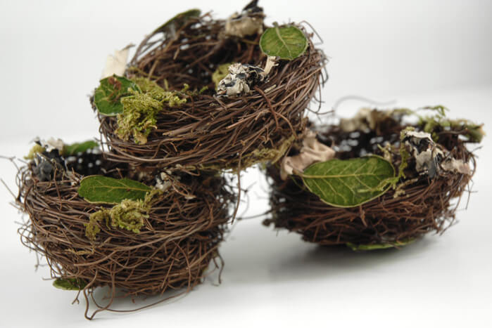 Bird Nests 3 X3 Angel Vine Leaves, Moss U0026 Lichen Photo Gallery