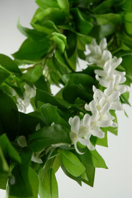 Jasmine, Gardenias & Bridal Stephanotis