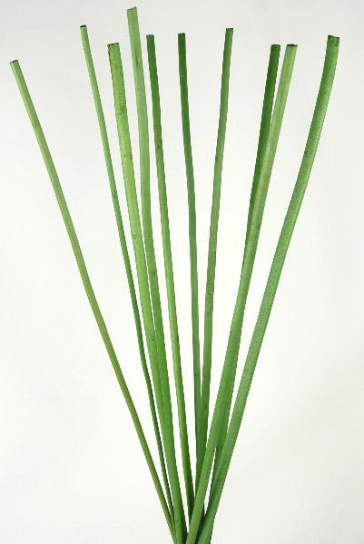 """10 Fiber Sticks 10 Green 28"""""""