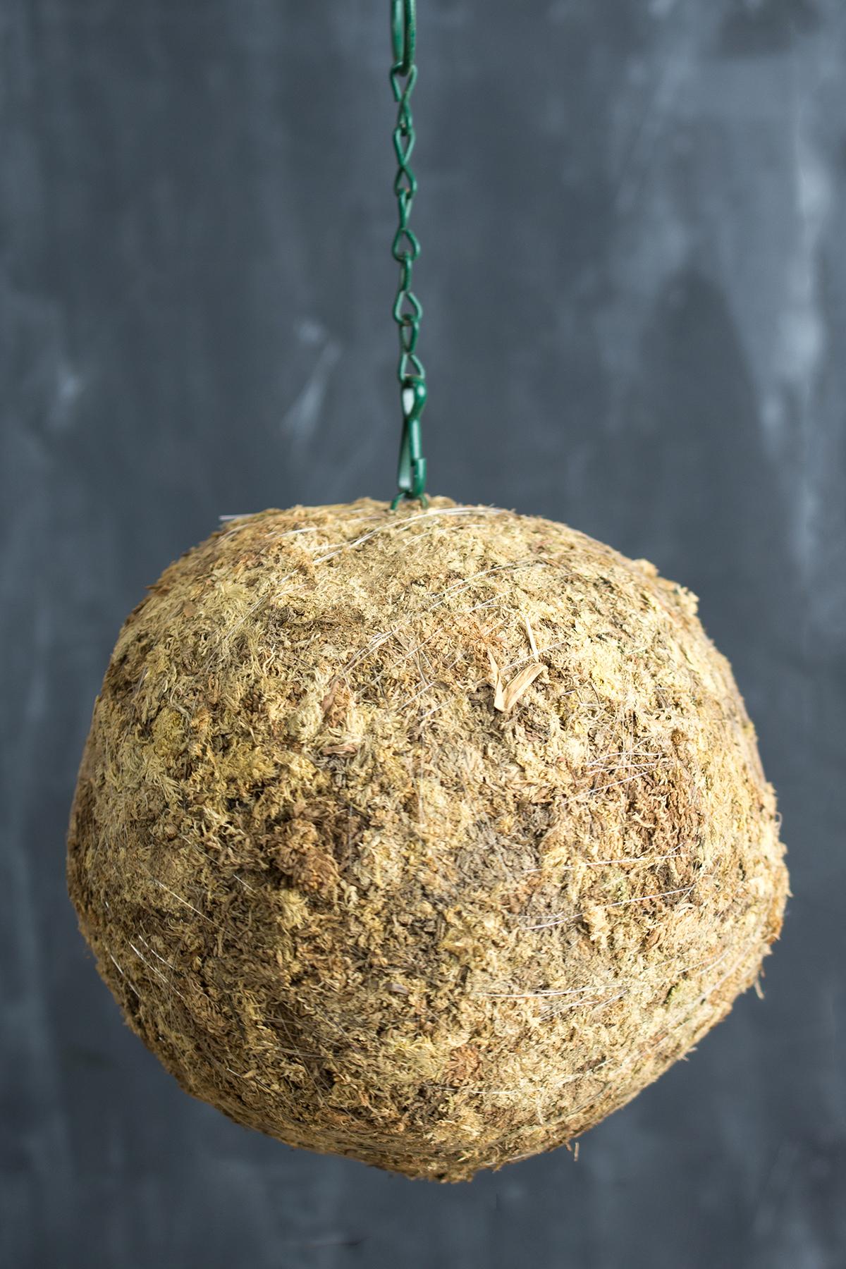 Kokedama Sphagnum Moss Ball Inch Hanging