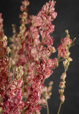Pink Dried Larkspur Flowers  15 Stems
