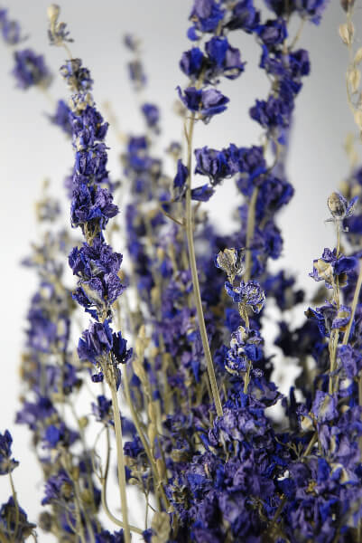 Dried Larkspur Purple 15 Stems
