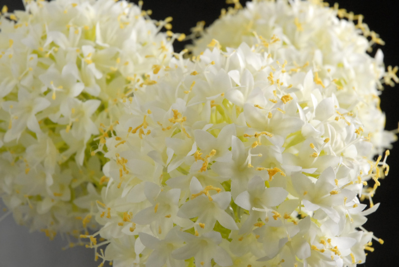 "3 Allium LED Flower Lights 32"" LED, Plug In"