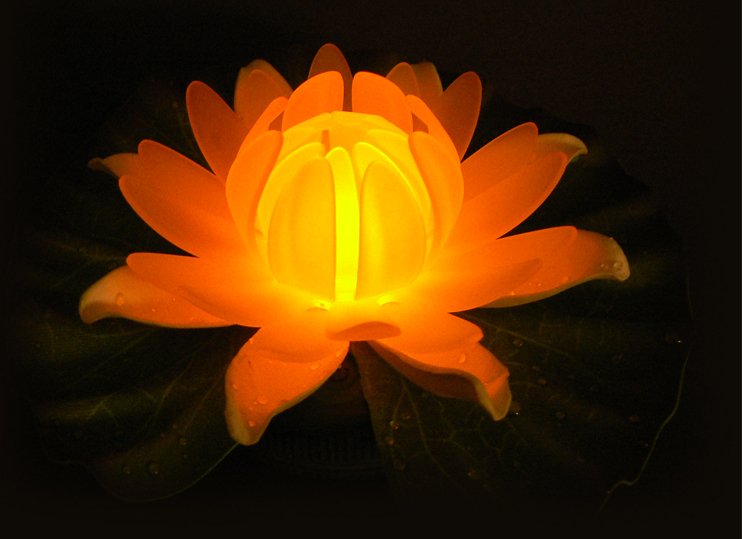 Glow Lily Floating LED Lily Pad Centerpiece &  Pool Light