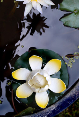 Lily Light Floating Yellow