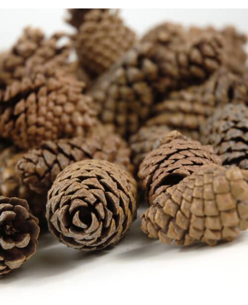 Lodgepole Pine Cones  3 quarts, 106 Cones