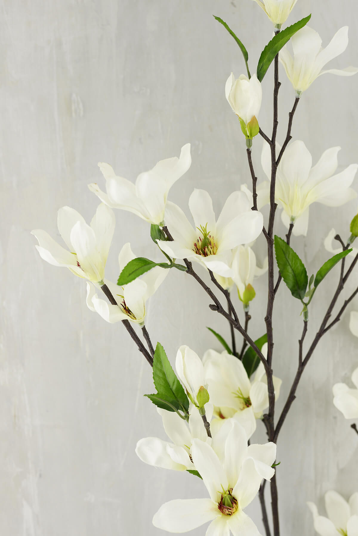 Magnolia Flowering Branches Cream Flowers 44 Quot