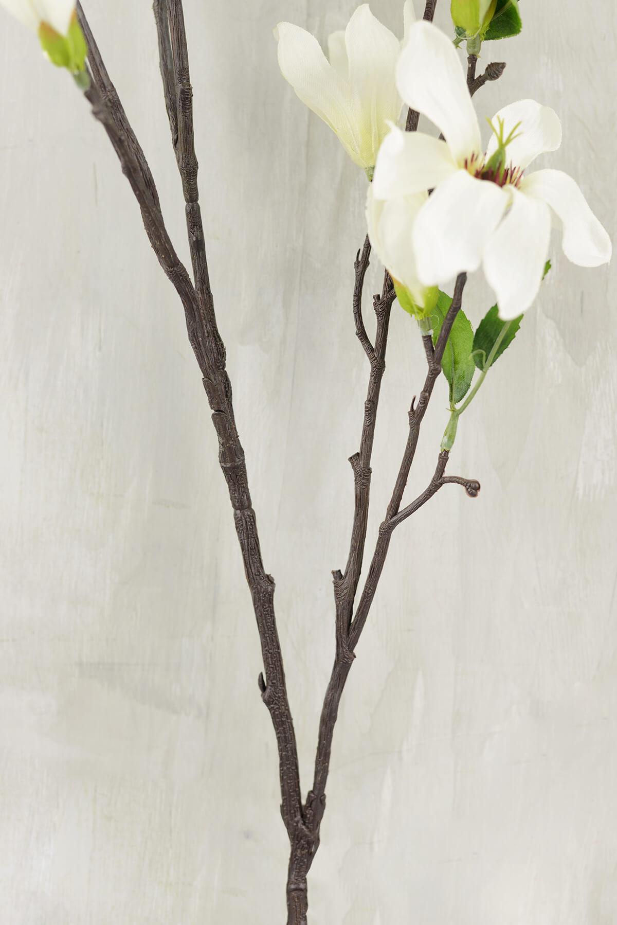 Magnolia Flowering Branches Cream Flowers 44 Quot