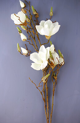Magnolia Spray Cream 40in