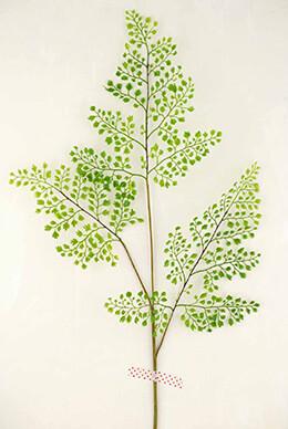 Fern Branch 34in Forest Maidenhair  12 Pack