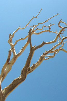 "Manzanita Branches Sanded 21-38"" Natural"
