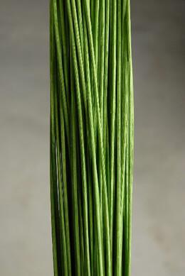 Midollino Sticks 42in Light Green 100-150 Pieces