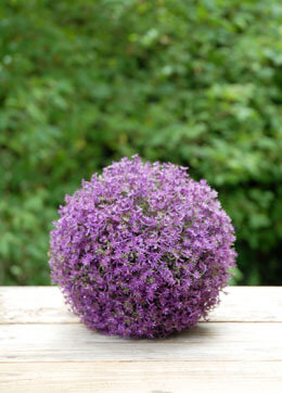 "Purple 7"" Flower Ball Decorations"