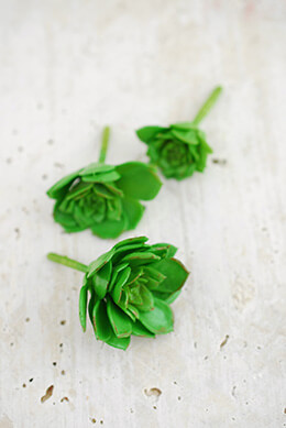 3 Mini Succulents Echeverias