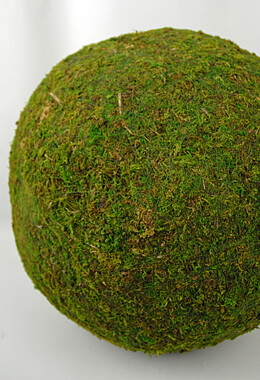 "Extra Large 15"" Preserved Moss Sphere"