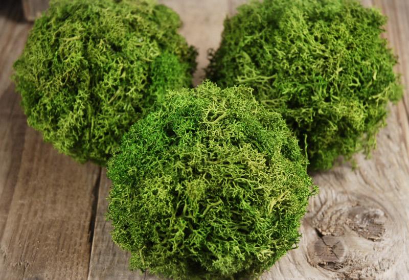 """Green Reindeer Moss 4""""  Balls (set of 3)"""
