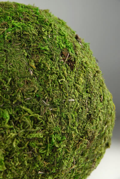 Preserved Moss Balls 8in