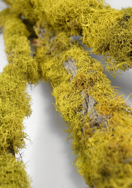 3 Reindeer Moss Covered Natural Branches 36in