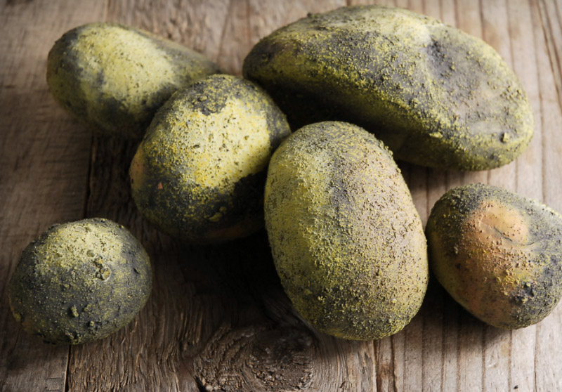 "6 Decor Moss Garden Stones 2""-4.5"""