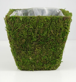 Moss Planter 5in