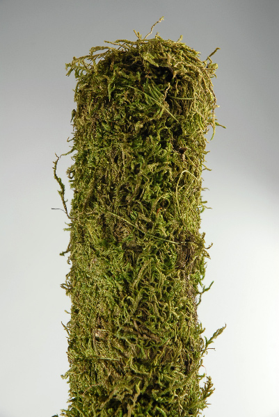 SuperMoss Covered Stakes, Green, 24-Inch Height