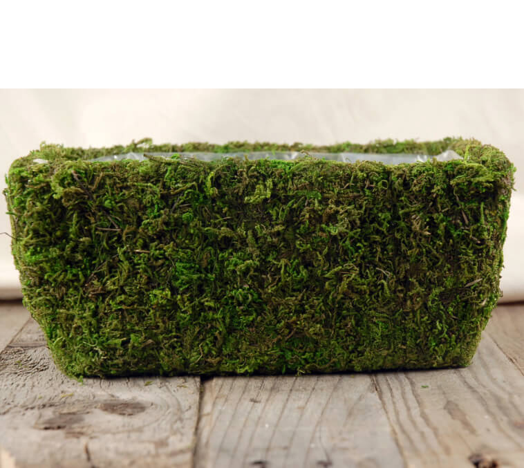 Moss Covered Planter Box 11 X 6 5