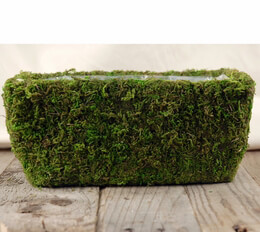 Moss Covered Planter Box 11 x 6.5