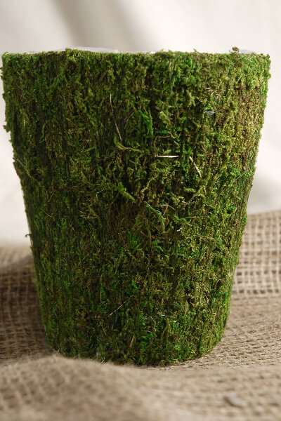 Round Moss Pot 5 75in
