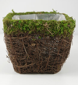 Moss and Wicker Square Pot 5in