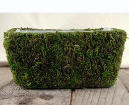 Moss Covered Planter Box 7.5 x 4