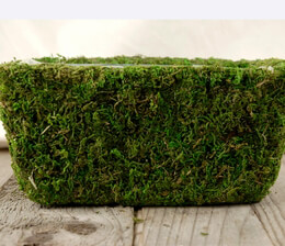 """Moss Pots Natural Preserved (8.5"""" x 5.25) with liners"""