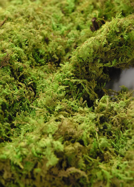 """Preserved Moss Sheets 4 lb 1"""" Thick"""