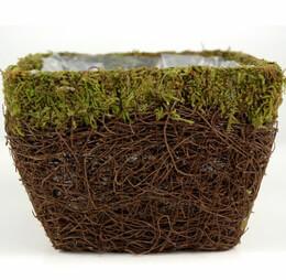 Moss & Wicker Planter 6in