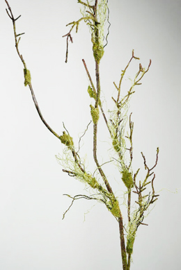 Moss Twig Branch  Green Brownl 55in