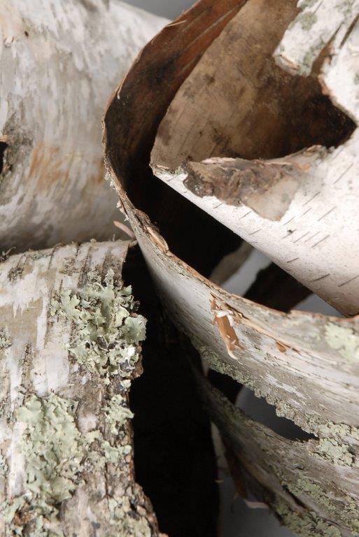 Natural Birch Bark Tubes 15in