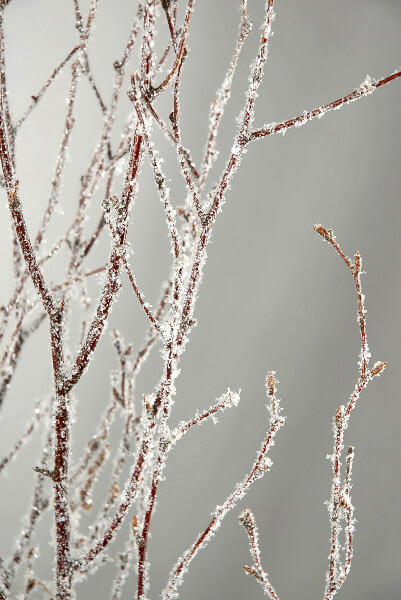 5 Natural 4 Birch Branches With Glitter Amp Snow