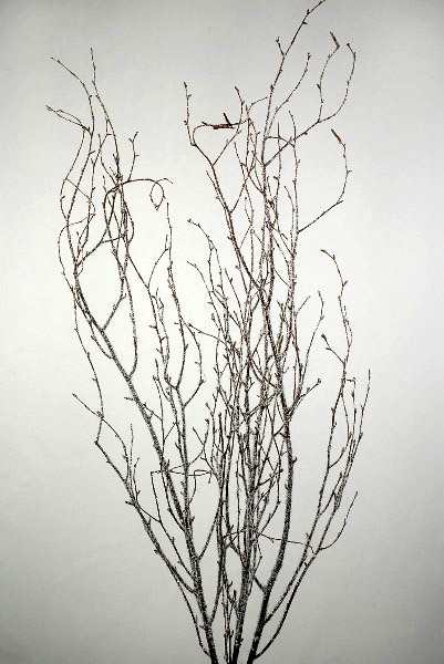 5  Natural 4' Birch Branches with Glitter & Snow
