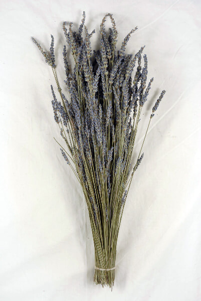 Natural Lavender Buds Stems Fragrant 120 stems