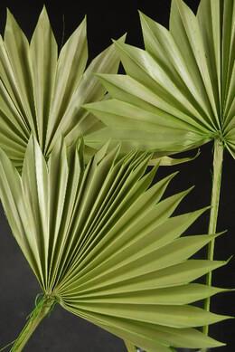 Palm Leaves Fans, Natural, (5 leaves) Preserved Light Green