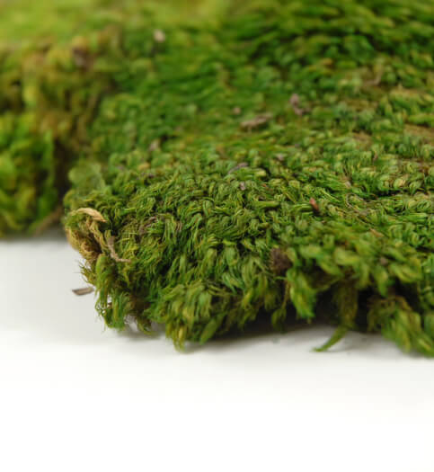 Mood Moss 480 Cubic In
