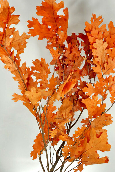 Preserved Orange Oak Branches 22-24 in.