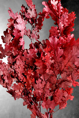 Preserved Red Oak Branches 22 24 In