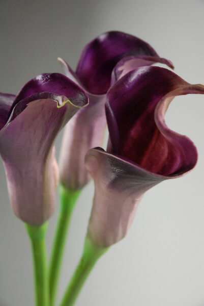 Real Touch Deep Purple Calla Lily Bud Flowers 25 Quot